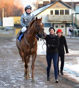 Red Robin på väg till vinnarcirkeln   Jägersro 161113 Foto: Stefan Olsson / Svensk Galopp