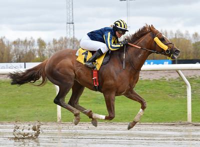 Puyol vinner med Ina Veronika Toverud Jägersro 170510 Foto: Stefan Olsson / Svensk Galopp