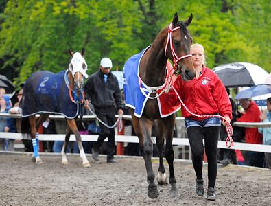 Darcy och skötare Mia Olsson i ledvolten. | DANSK DERBY | Klampenborg 120624 |  Foto: Stefan Olsson / Svensk Galopp