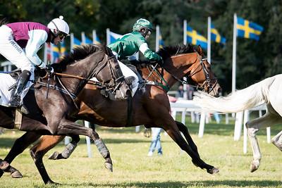 Hästarna i Sorrento Novis-steeeple  Strömsholm 180915 Foto: Elina Björklund / Svensk Galopp