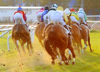 Fältet i SM Classic  i järnvägskurvan | Täby 110827 Foto: Stefan Olsson / Svensk Galopp
