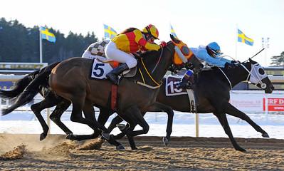 Always de Man och Leonard Rios vinner före Novasun och Chicago   Täby 120129    Foto: Stefan Olsson / Svensk Galopp