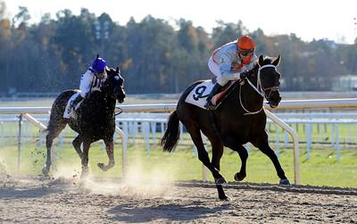 Sugar Ray vinner med Ninni Westerlund | Täby 121028 | Foto: Stefan Olsson / Svensk Galopp