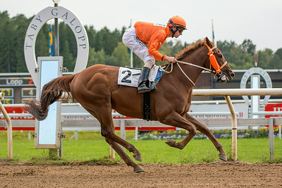 Shepherd Gate vinner med Jacob Johansen | Täby 140721 | Foto: Elina Björklund / Svensk Galopp