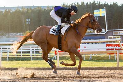 Avestruz vinner under Carlos Lopez | Täby 150104 | Foto: Elina Björklund / Svensk Galopp