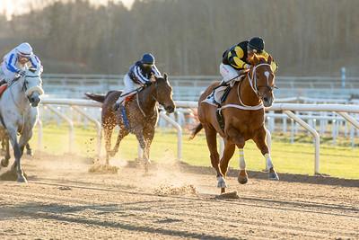 Spykes Bay vinner med Oliver Wilson | Täby 150104 | Foto: Elina Björklund / Svensk Galopp