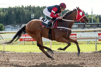 Amadeus Sprint vinner med Jan-Erik Neuroth | Täby 150909 | Foto: Elina Björklund / Svensk Galopp