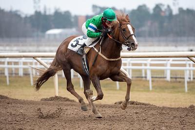 Classified vinner med Madeleine Smith | Täby 160306 | Foto: Elina Björklund / Svensk Galopp