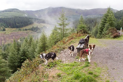 Wed 22nd Aug : Bob's Seat : Three Collies & Grisedale Pike