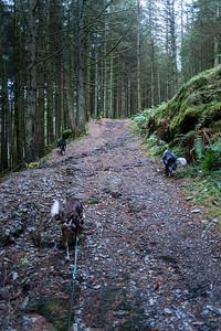 Sun 11th Dec : Up Through The Dark Forest