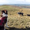 Lord's Seat : Girls At Play : Looking North To Scotland