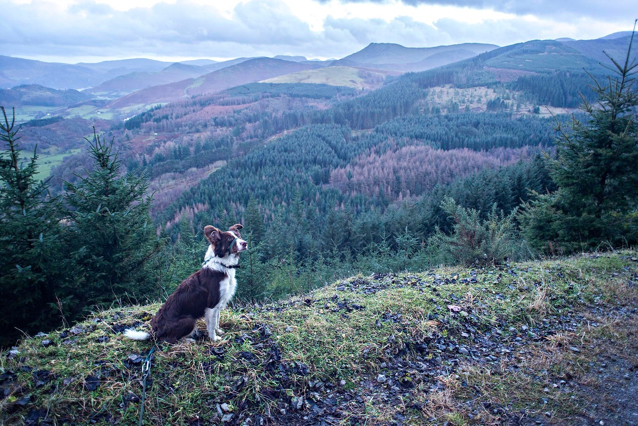 Wed 21st Dec : Katie On The Road Down From Sayer's Bench