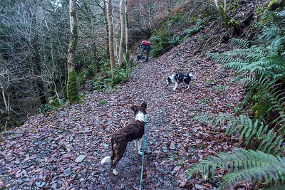 Sun 11th Dec : On The Comb Beck Path