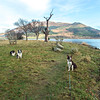 Wed 28th Dec : Arrival On The Promintory At Bassenthwaite Lake