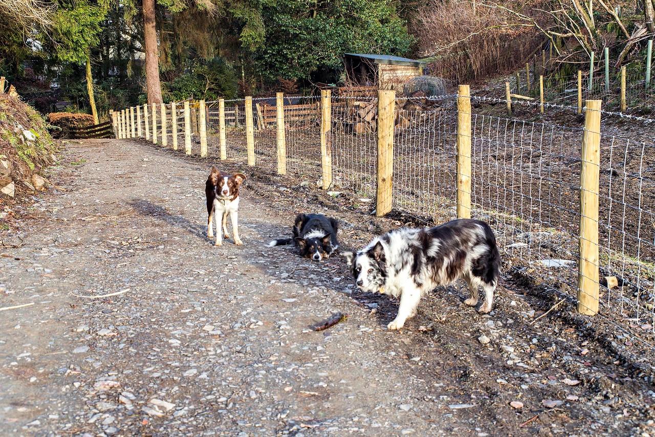 Mon 5th Dec : on the Ladstock path