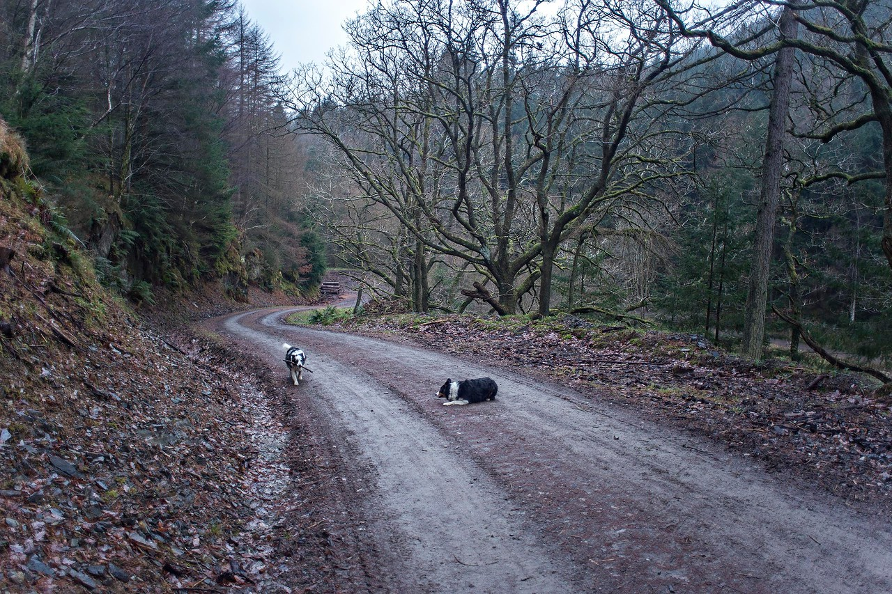 Tue 20th Dec : forest road ascent