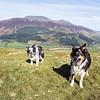 Barf Summit : Cassie, Bess and Skiddaw