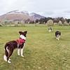 Fri 24th Feb : At Castlerigg Stone Circle