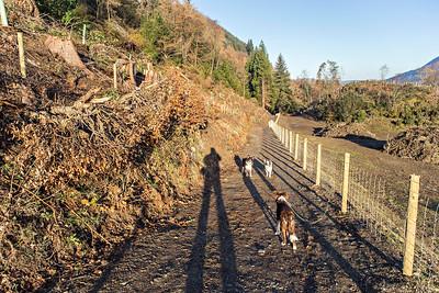 Sun 4th Dec : on the Ladstock path