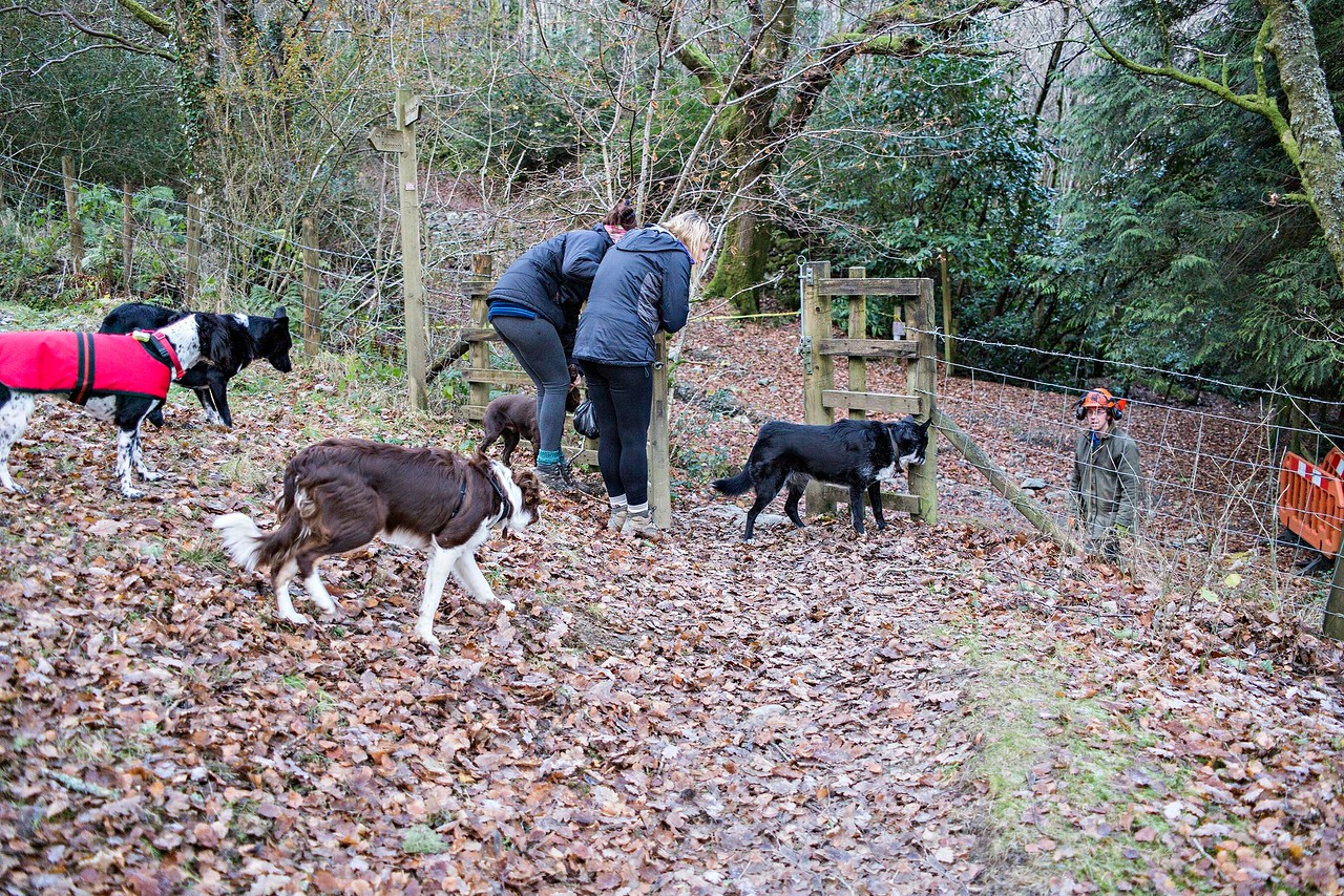 Mon 5th Dec : Katie with Naomi & her pack at the Braithwaite gate