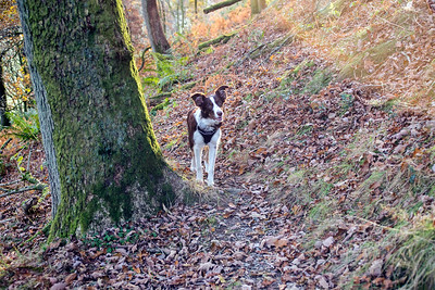 Mon 5th Dec : Katie on oak tree path