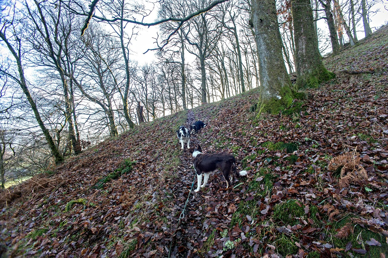 Sat 17th Dec :  up the hill into the oak wood