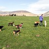 Wed 15th Mar : With Holly At Castlerigg Stone Circle