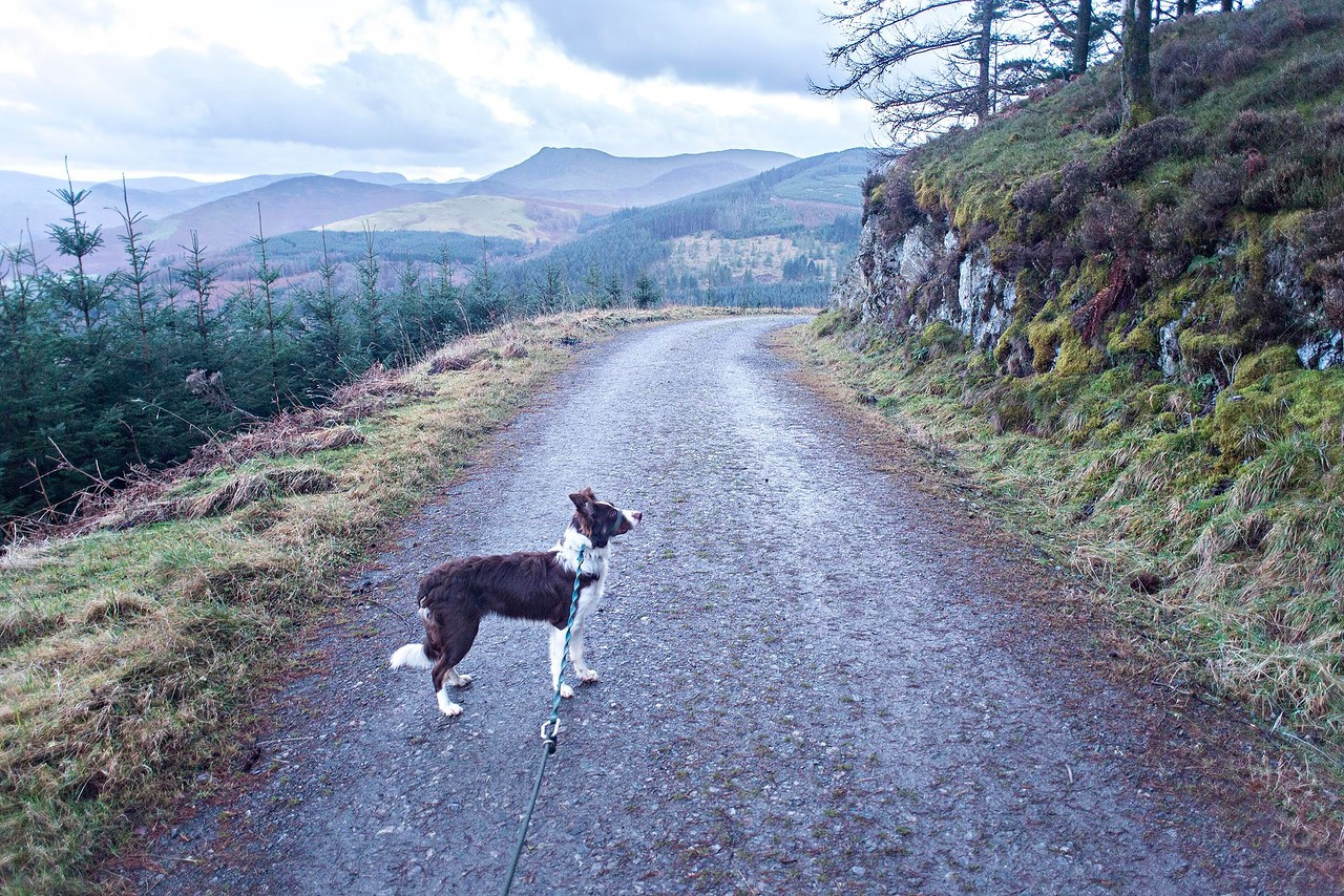 Wed 21st Dec : Katie On The Road At Sayer's Bench