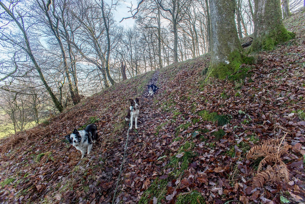Sat 17th Dec :  up the hill to the oak wood
