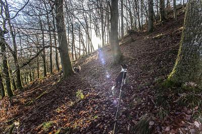 Sat 17th Dec :  in the oak wood