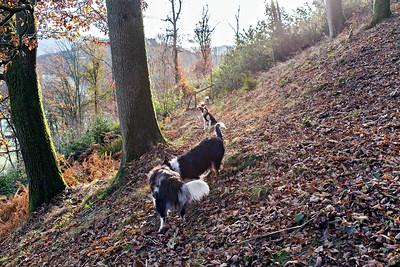 Mon 5th Dec : On The Oak WoodPath