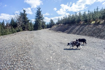 Thu 4th May : On The Hospital Plantation New Wide Road