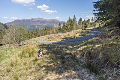 Thu 4th May : Other Side Of The Whinlatter Pass Road : Masmills