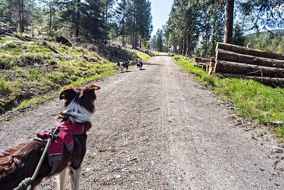 Thu 4th May : Forest Road : Other Side Of The Whinlatter Pass Road