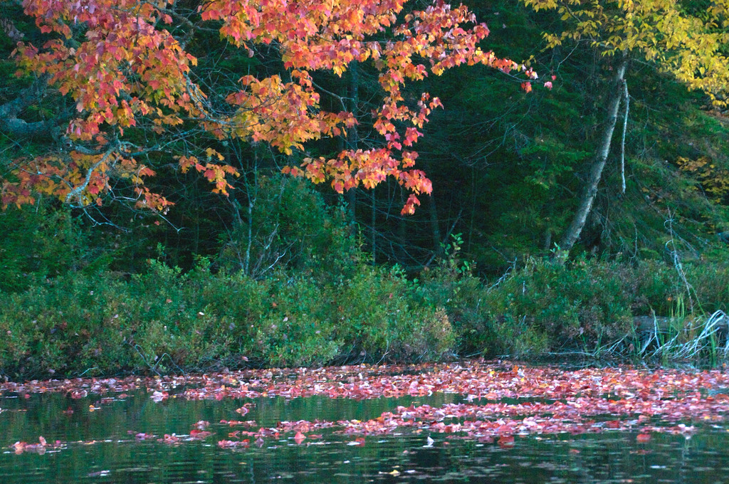 Autumn Beauty shows along the shore
