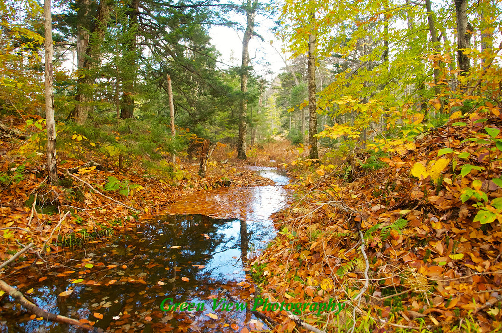 Waterway through the autumn woods