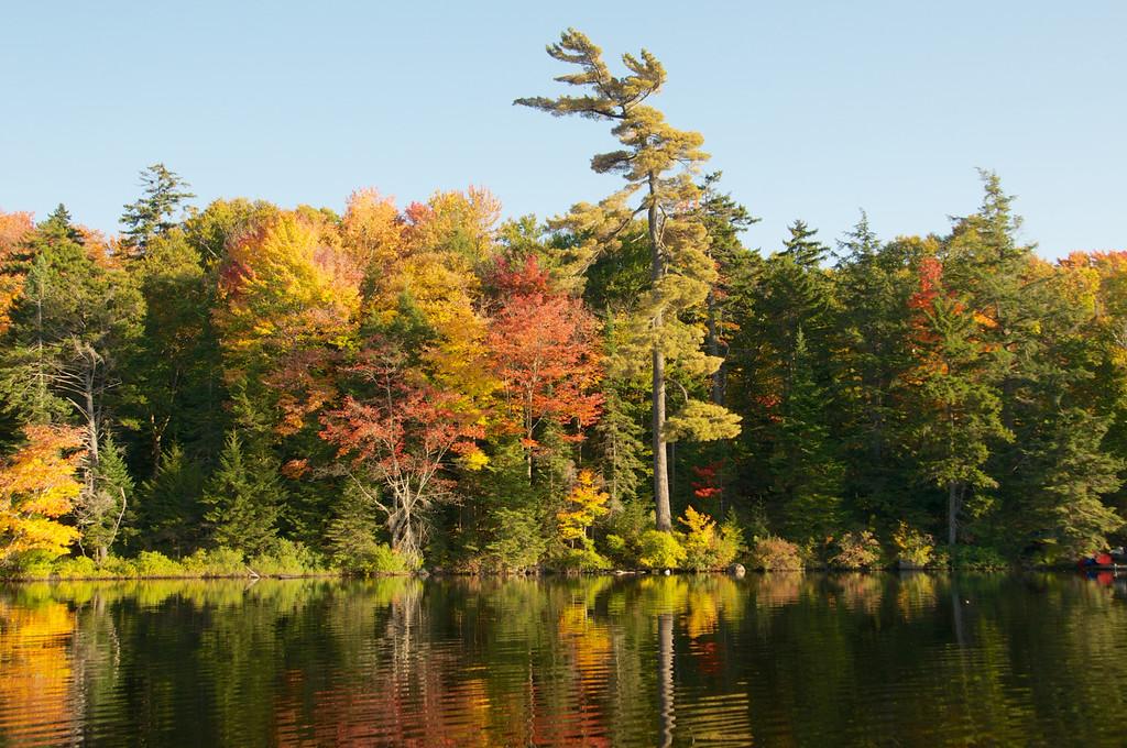 Autumn colors surround the pine tree
