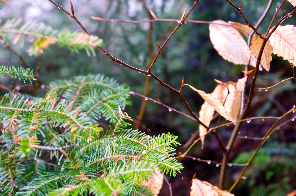 Dew on the branches