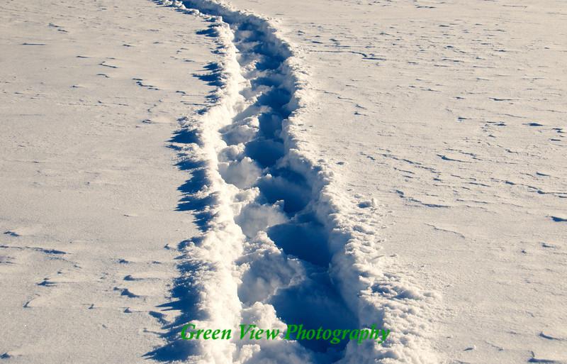 Snow Shoe prints