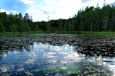 Scattered Lily Pads