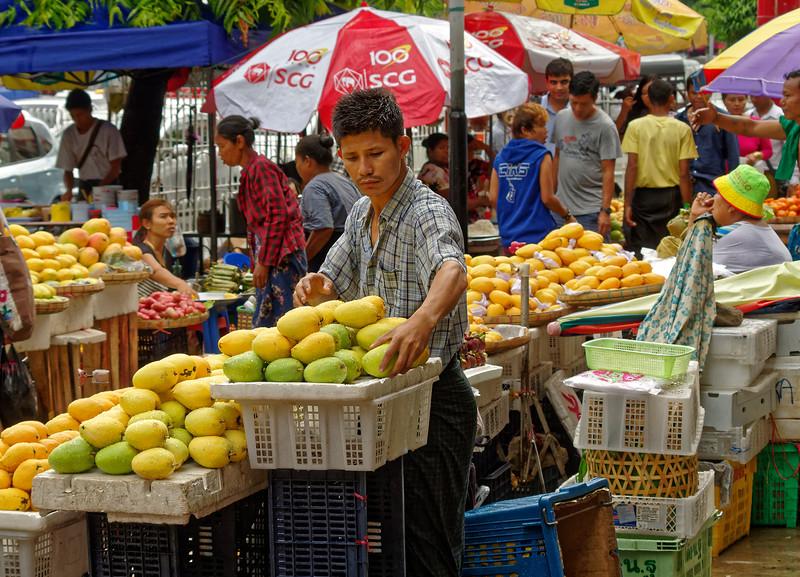 Mangoes still wet from the rain