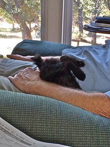 Swiffer goes to sleep in the deep warm part of chair and lap.  IMG_0079-102514 copy
