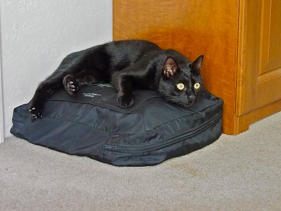 Swiffer tries to hold down the suitcase bags.  _A140009 copy