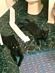 When Mom's Away, Cats Play.  IMG_0108 copy