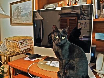Sofia is my office Cat.  P2120063-021215 copy