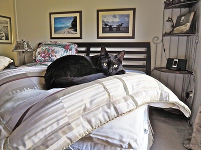 Sofia lays claim to the foot of the bed.  _A140011 copy