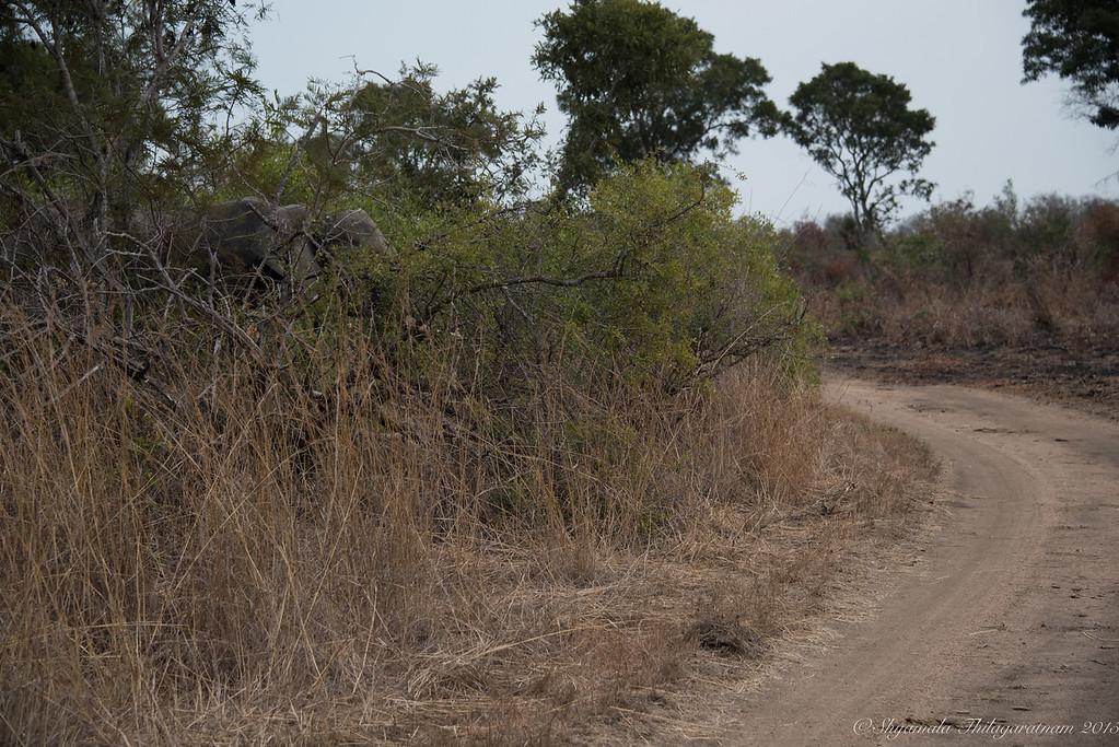 Spot the elephant