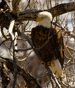 From a different ride, in Colorado. All the eagles we saw this trip were far off but in an Eagle viewing gallery there should be at least one good photo of the bird!