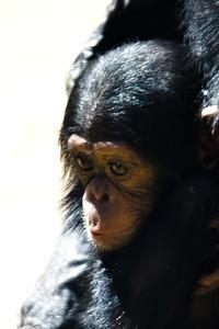 Zoo Babies-1-6