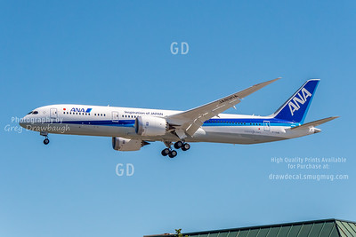 ANA Stretch Dreamliner